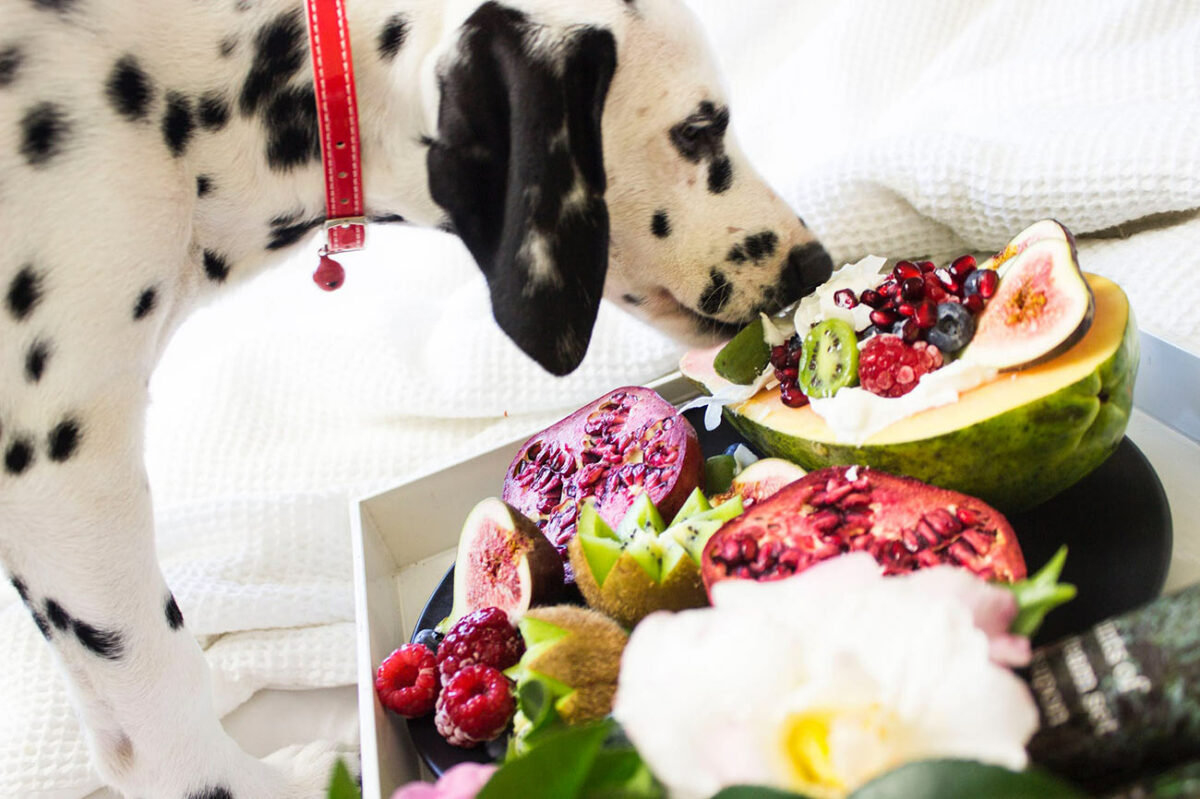 DIY Homemade Food For Your Pet